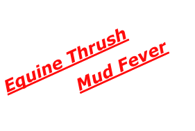 Equine Thrush